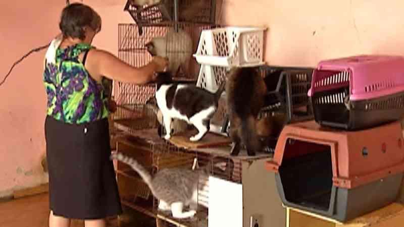 Suzano (SP) passa a oferecer atendimento emergencial gratuito para animais vítimas de acidentes e maus-tratos