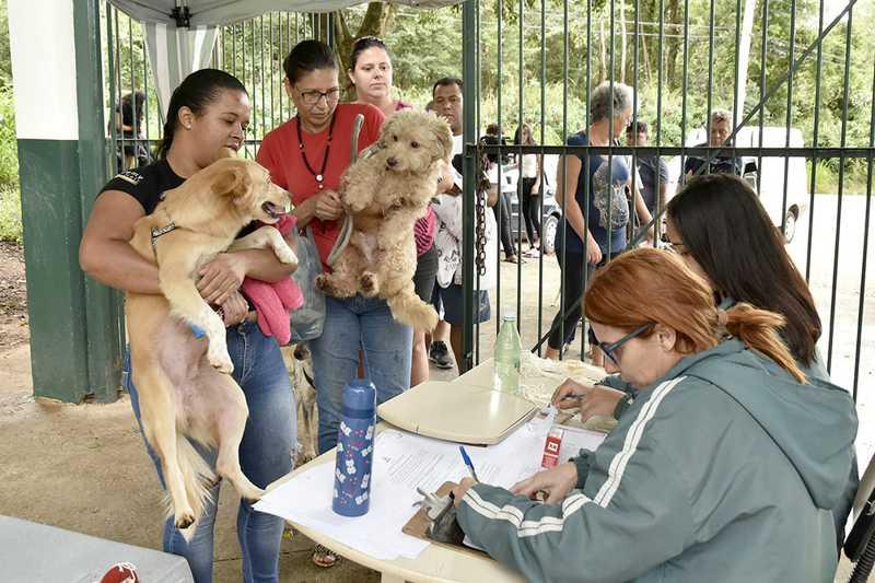 Águas de Lindóia (SP) oferece castração gratuita para 400 cães e gatos; veja como se inscrever