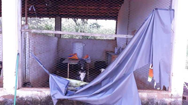 MP entra com ação contra Prefeitura de Auriflama (SP) para que abrigo de cães abandonados seja reformado
