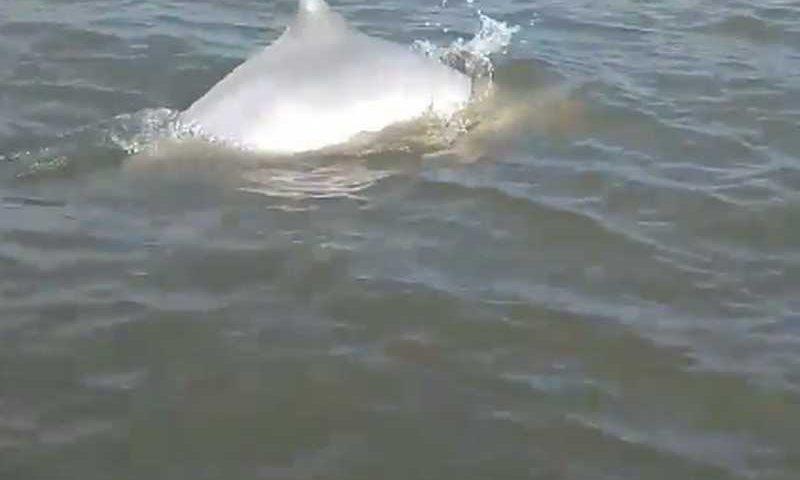 Animal foi flagrado por monitores entre Cananeia e Ilha do Cardoso (SP) — Foto: Reprodução