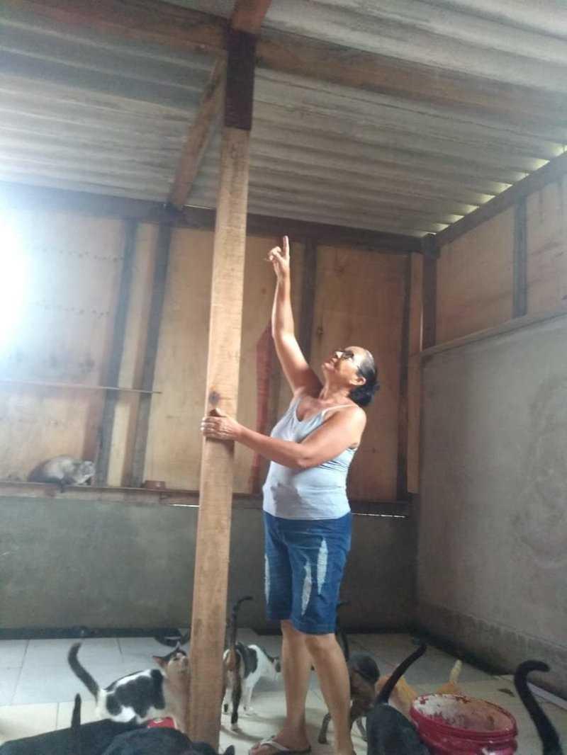 Mulher que acolheu 134 animais em Cubatão (SP) precisa reconstruir telhado de gatil