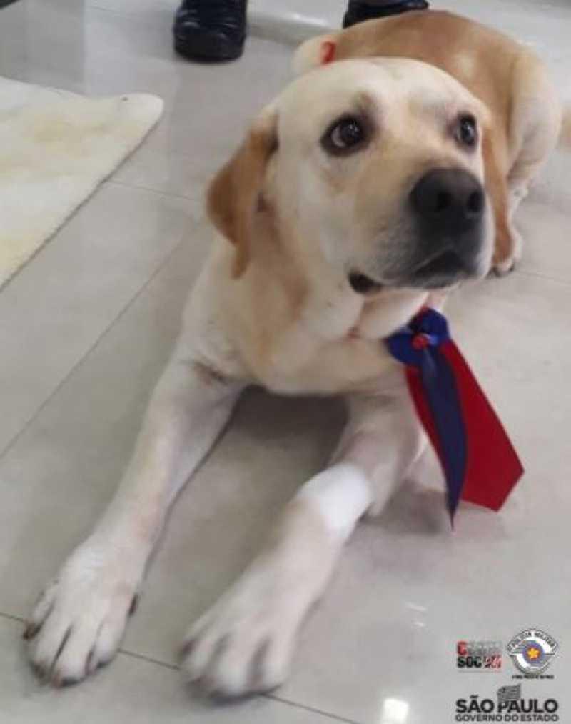 Mulher que esfaqueou cachorro em Jaú (SP) é multada em R$ 3 mil