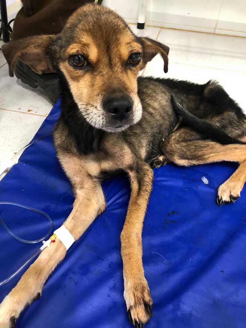 Prefeitura resgata 16 animais vítimas de maus-tratos em casa na zona oeste de Marília — Foto: Prefeitura de Marília/Divulgação