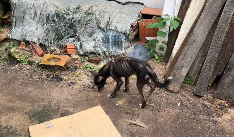 Animais apresentavam sinais visíveis de desnutrição e baixa imunidade em Marília — Foto: Prefeitura de Marília/Divulgação