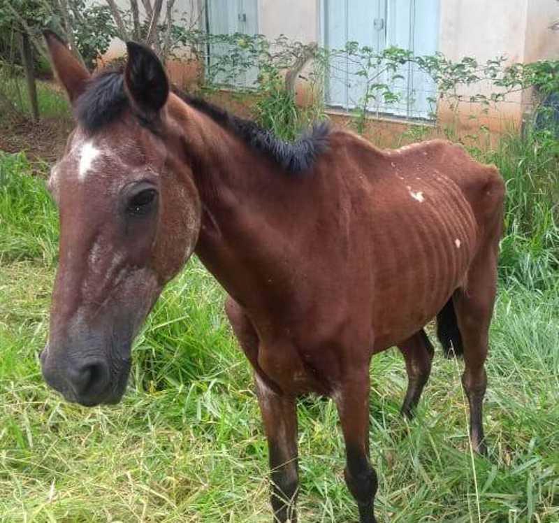 Polícia Ambiental registra maus-tratos a cães, porcos e cavalos em Mogi Mirim, SP