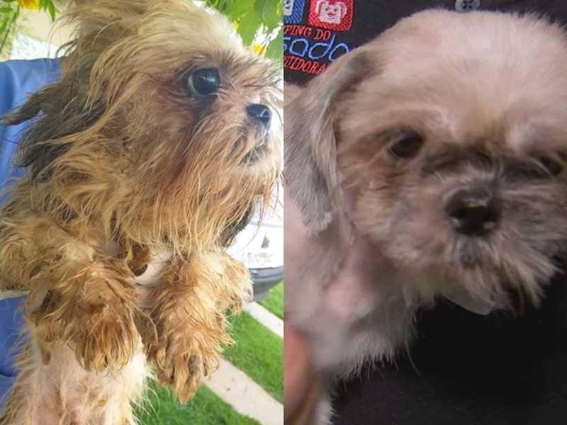 Ao lado esquerdo, um cachorro resgatado no canil, e à direita, um outro cachorro após banho — Foto: Reprodução/TV TEM