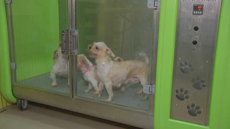 Cachorros passaram por banho e tosa em Rio Preto após serem resgatados de canil — Foto: Reprodução/TV TEM