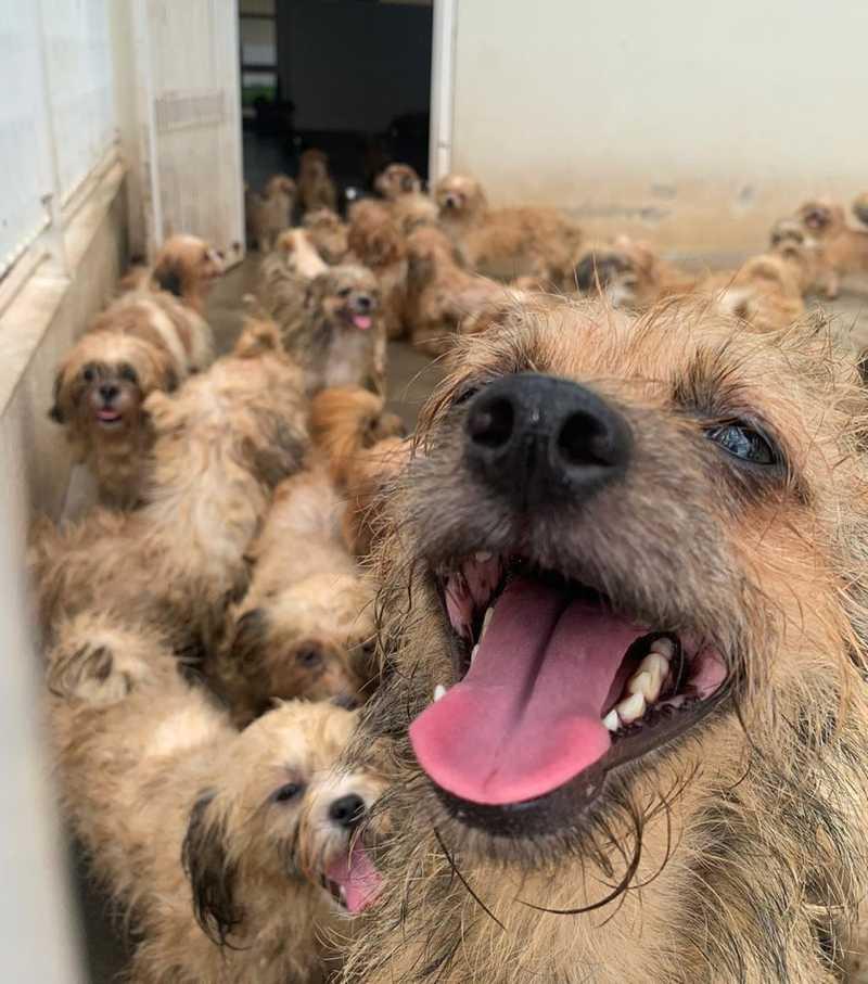 Cães viviam dentro de uma casa em bairro de Rio Preto — Foto: André Modesto/TV TEM