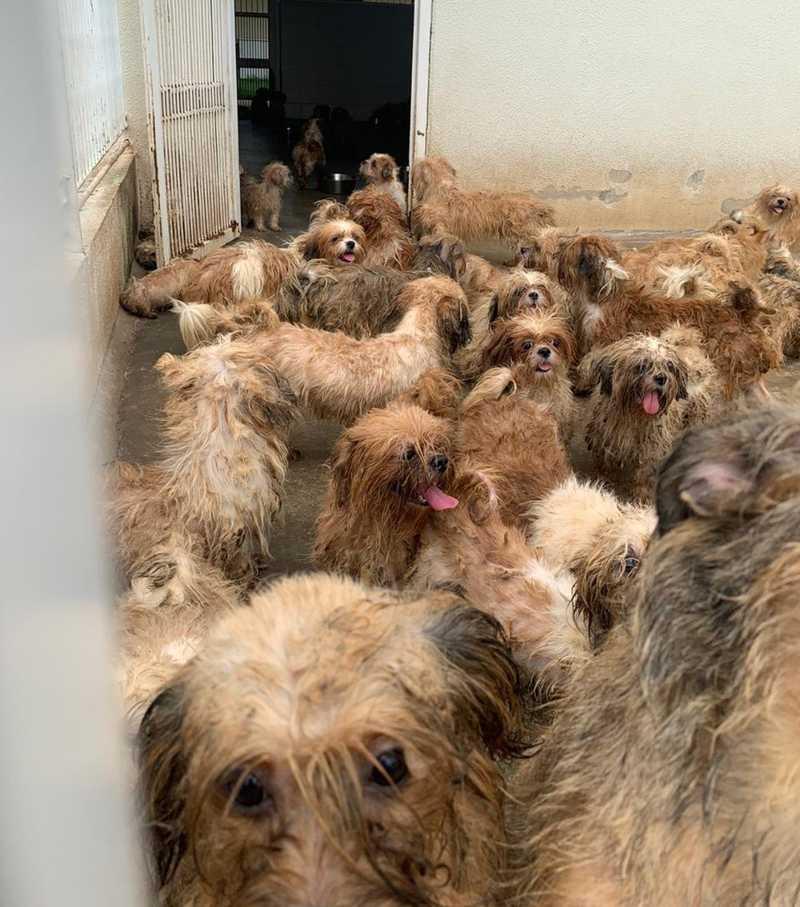 Ao todo, foram encontrados 66 cães — Foto: André Modesto/TV TEM