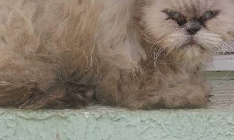 Gato encontrado na clínica em situação de maus tratos. Divulgação