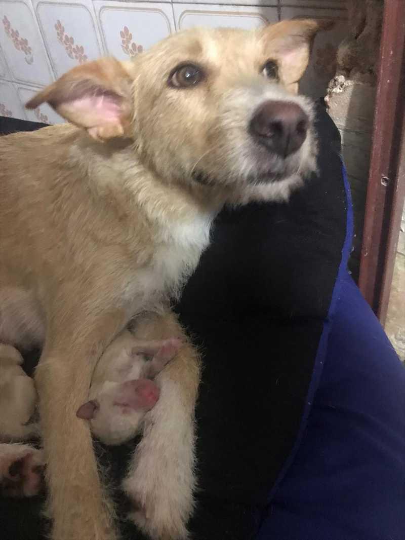 Estrela e os seis filhotes foram abrigados na casa de uma protetora em Santos (SP) após abandono — Foto: Arquivo Pessoal