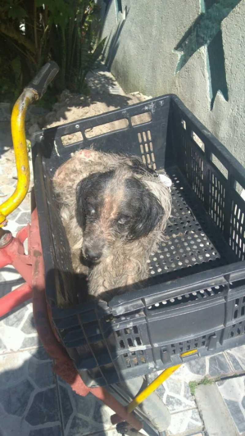 Auxiliar de serviços gerais colocou cachorro na cesta da bicicleta e levou para casa para cuidar. — Foto: Arquivo Pessoal