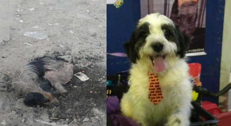 Cachorro foi resgatado com sarna, vermes e desnutrição. — Foto: Arquivo Pessoal