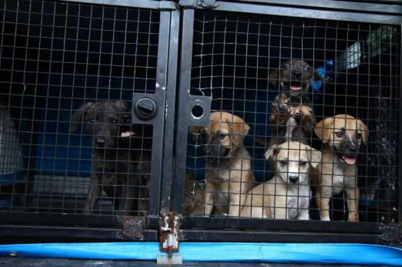 Prefeitura de Santos (SP) autua munícipes por maus-tratos a animais