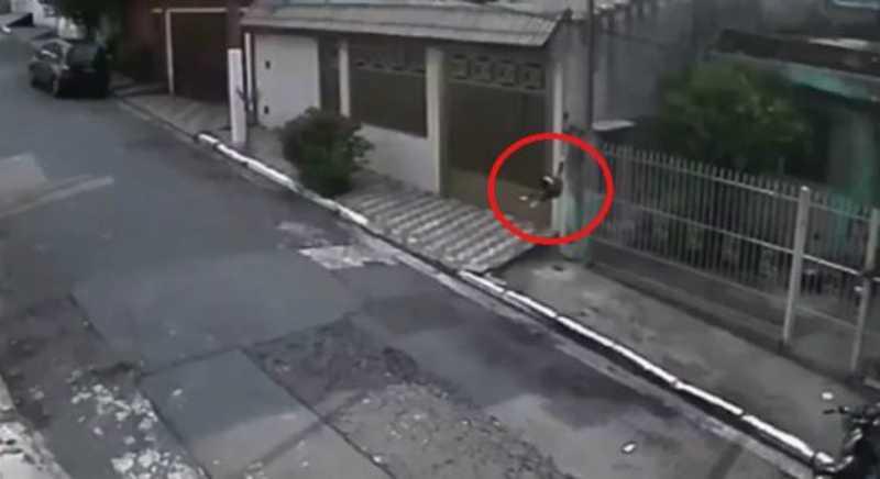 Vídeo mostra homem arremessando cachorro por cima de portão na Zona Leste de SP