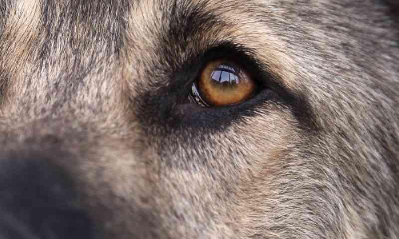 Cão com pernas amarradas em saco de lixo é abandonado perto de rio, mas veja sua reação ao ver seus socorristas