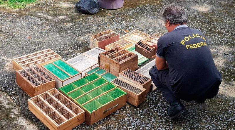 Segundo a Polícia Federal, depois de capturados os animais eram comercializados no Tocantins e em outros estados.