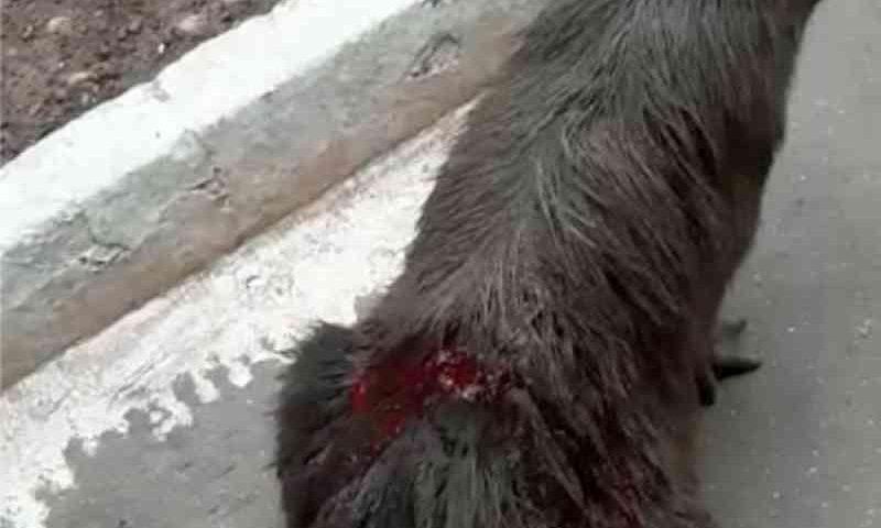 Vídeos mostram capivaras feridas em parque de Palmas, TO; Prefeitura diz que brigas entre animais podem ser causa