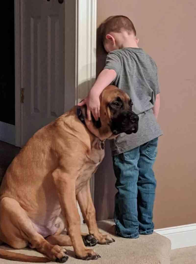 Cachorro acompanha seu tutor no castigo e foto viraliza nas redes sociais