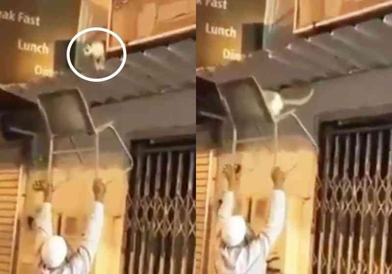 Vídeo de idoso resgatando gato do telhado com cadeira viraliza
