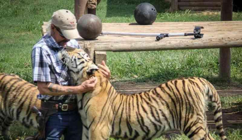 'Dá-lhe um tiro e foge': youtuber manda matar dirigente de reserva de animais selvagens