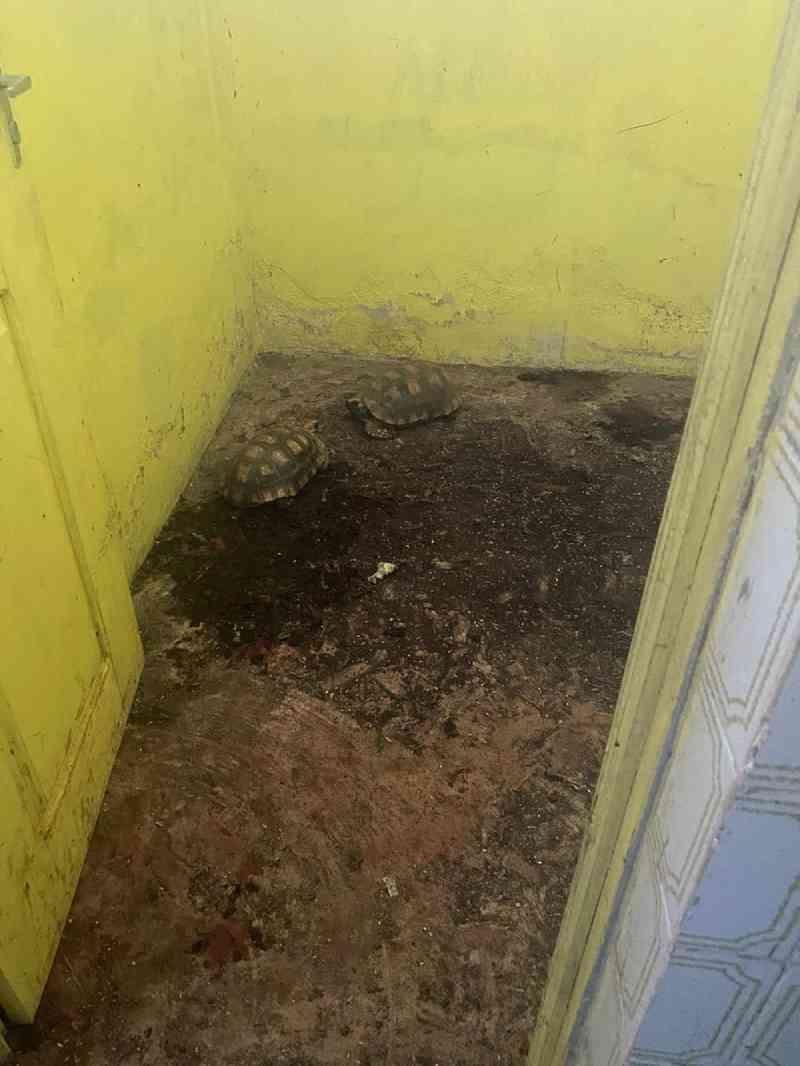 MP acha jabutis em situação de maus-tratos dentro de órgão ambiental no interior do Acre