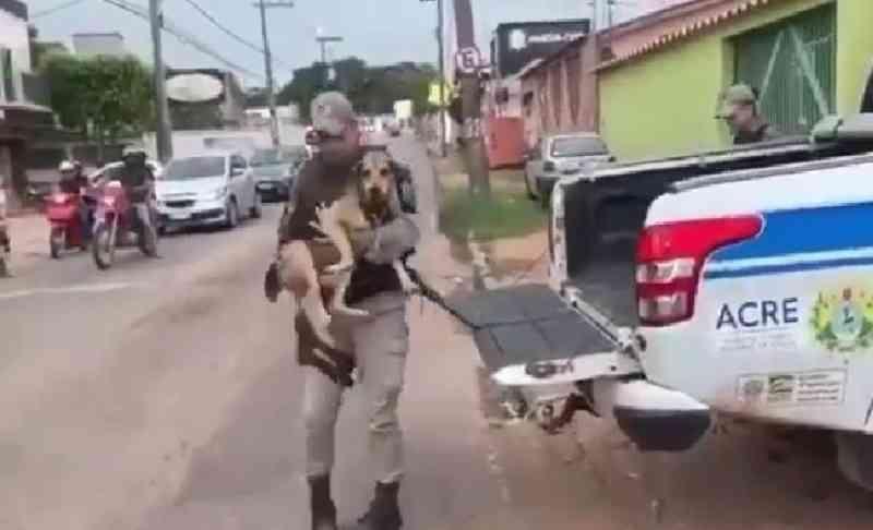 PM's do Acre levam cadelinha doente a clínica veterinária e a adotam como mascote