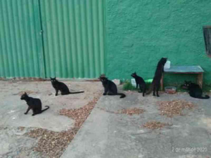 Moradora denuncia abandono de mais de 10 gatos em Maceió (AL) e apela por adoção