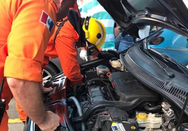 Bombeiros resgatam filhote de gato em motor de carro, em Arapiraca, AL