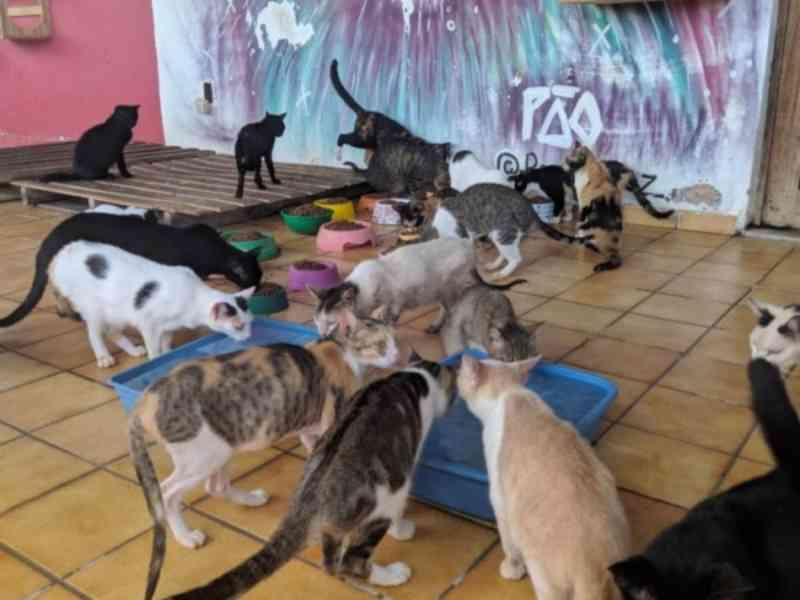 Grupo Pata Amada lança campanha de doações para continuar funcionando