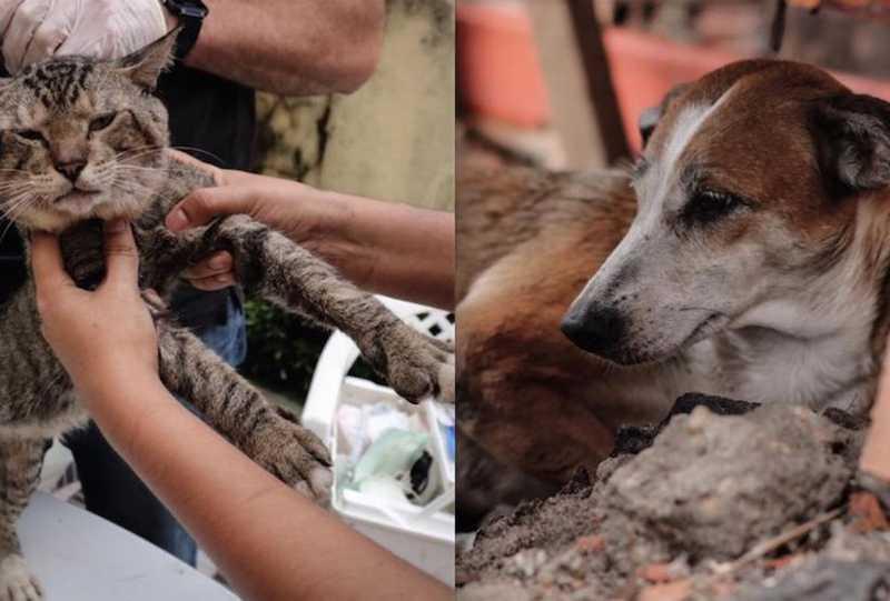 Vítimas de incêndios, animais recebem atendimento veterinário em Manaus
