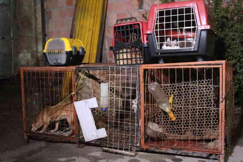 Polícia disponibiliza registro online de Boletim de Ocorrência de maus-tratos contra animais no Amazonas