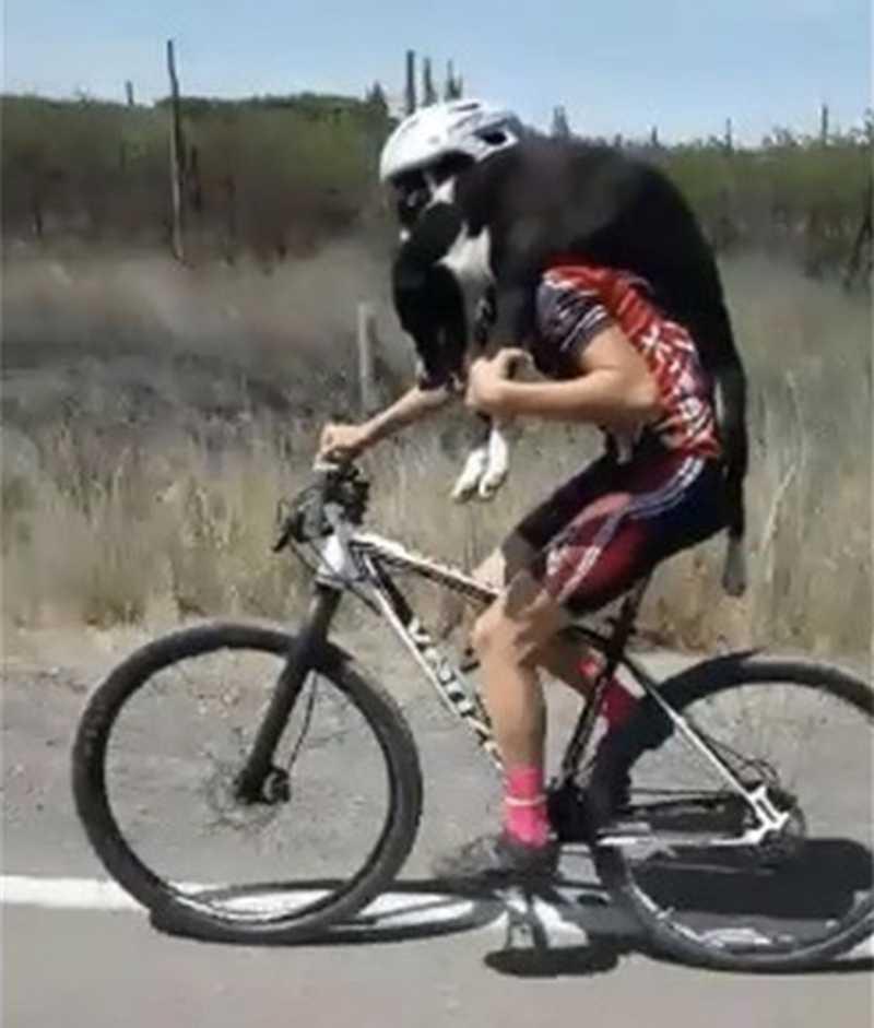 Equipe de ciclistas salva cachorro abandonado no meio do deserto; vídeo