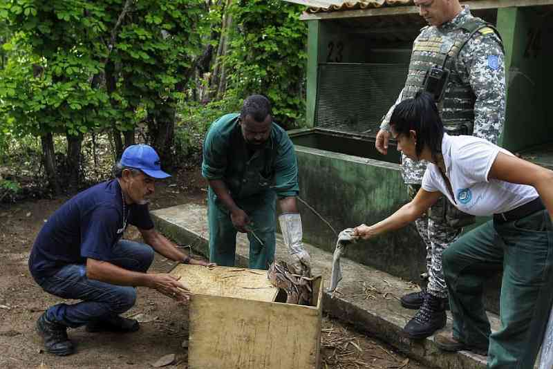 De volta ao habitat: Ibama solta cerca de 150 animais silvestres na natureza