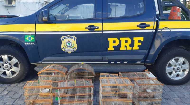 Aves silvestres mantidas em cativeiro são resgatadas em Feira de Santana, BA