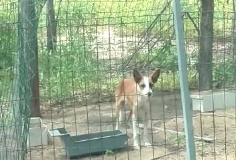 Cidadão denuncia maus-tratos contra animais na região do Junco de Jacobina, na BA