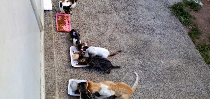 Sujeitos de direito: indenização de R$ 230 mil será usada para cuidar de gatos, diz advogada de ação contra construtoras