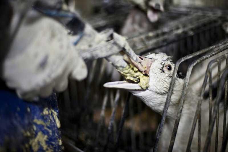 STF vai decidir se município de São Paulo pode editar lei proibindo o foie gras