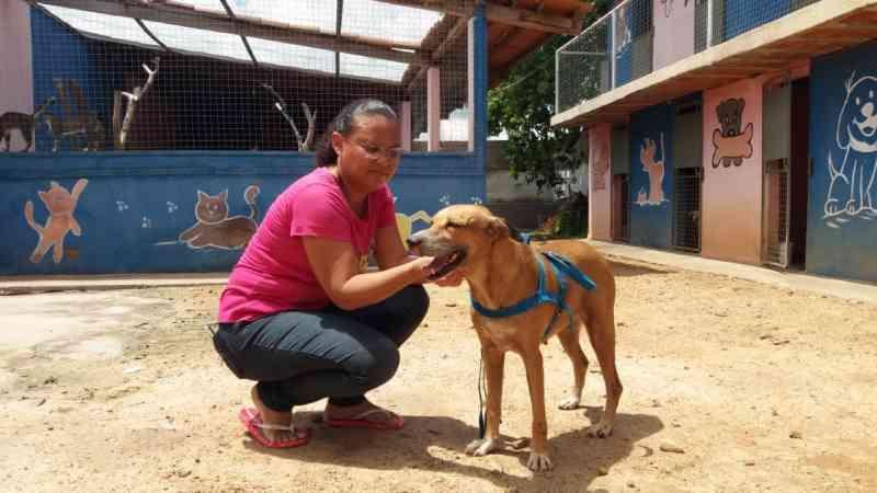 Câmeras de segurança flagram casal abandonando cachorro em avenida de Iguatu, CE