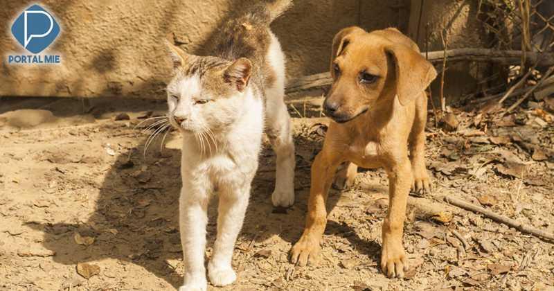 Cães e gatos abandonados no começo do surto de coronavírus estão famintos ou sendo mortos