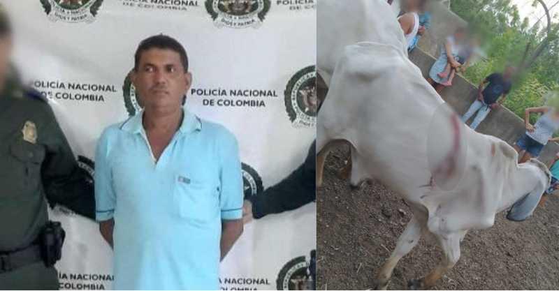 Polícia captura homem que feriu com facão 6 vacas