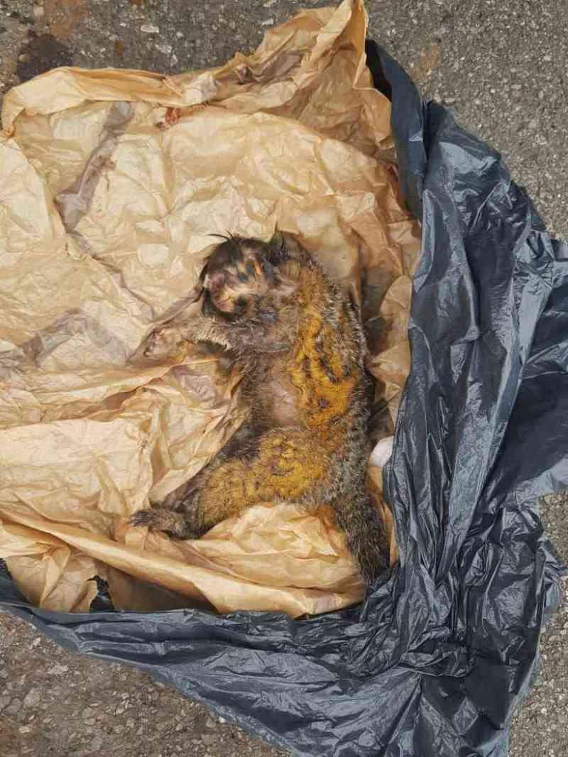 Macaco é resgatado dentro de saco plástico em lixeira no Sudoeste, em Brasília, DF