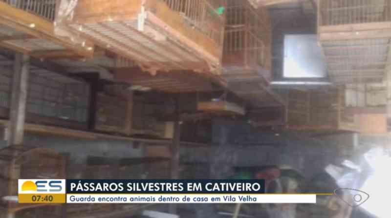 Guarda municipal apreende mais de 60 pássaros silvestres em Vila Velha, ES