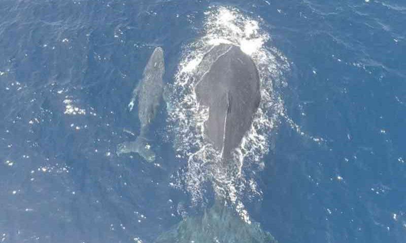 Cientistas usam drones para medir efeitos da lama da Samarco em baleias e botos da foz do Rio Doce