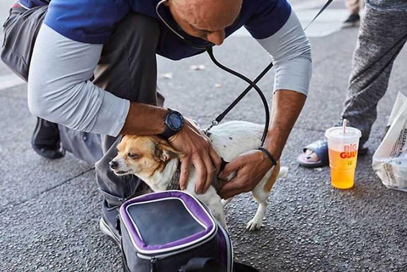 Veterinário se dedica a tratar cachorros que vivem com seus tutores nas ruas