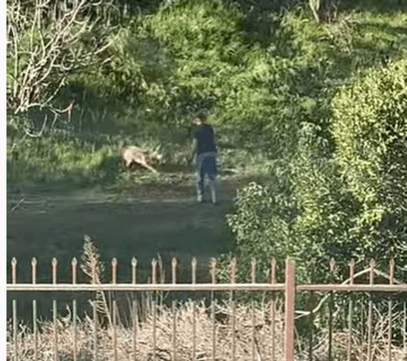 Ativistas pedem investigação de homem que atirou em coiote repetidas vezes; vídeo