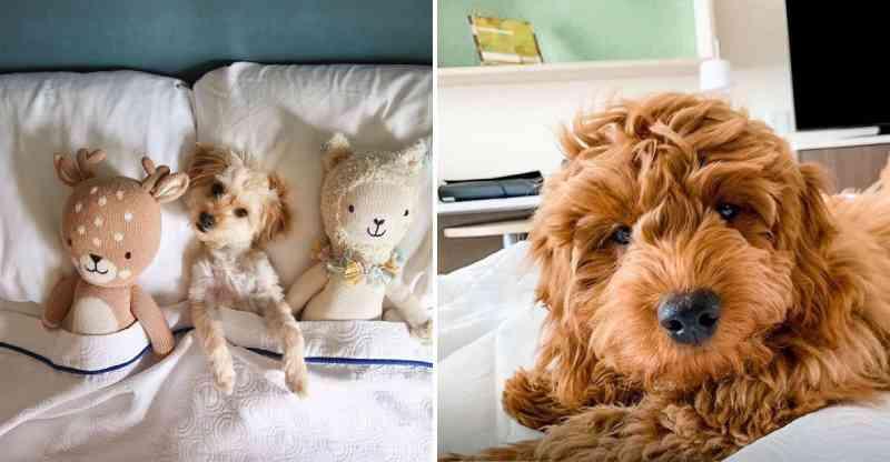 Hotel permite que hóspedes adotem cães de abrigo durante estadia
