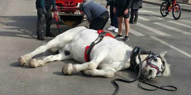Cavalo desaba ao puxar carruagem e morre horas depois
