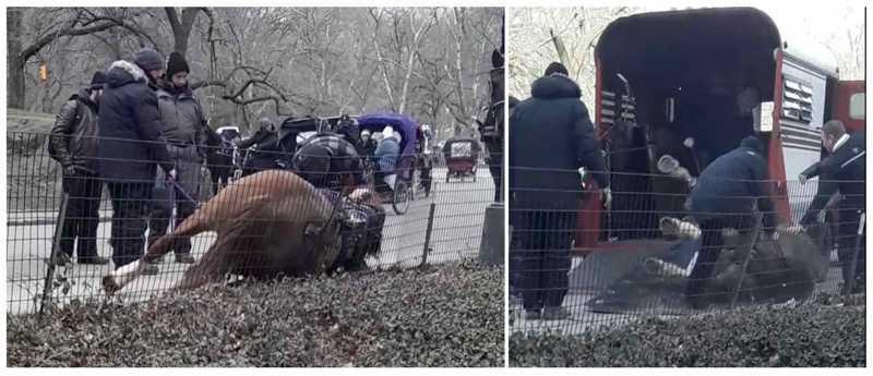 Morte violenta de égua de carruagem provoca indignação na cidade Nova York