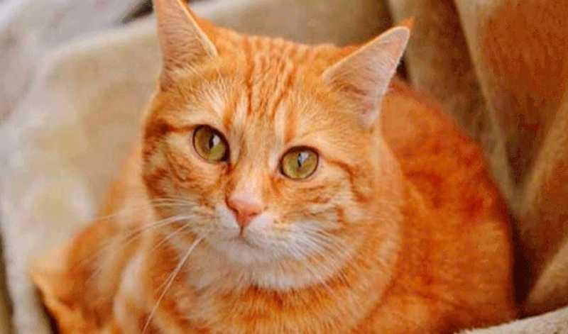 Gato 'Cupido' passa uma semana com flecha na cabeça e sobrevive